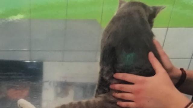 Λυκειάρχης στη Λαμία πυροβόλησε γατάκι και το άφησε παράλυτο