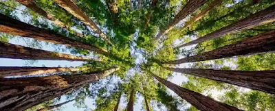 I wonder about the trees. Why do we wish to bear Forever the noise of these More than another noise So close to our dwelling place? We suffer them by the day Till we lose all measure of pace, And fixity in our joys, And acquire a listening air.