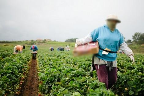 شهادات عاملات فلاحيات موسميات: تحرّش وهشاشة وأمراض مهنية