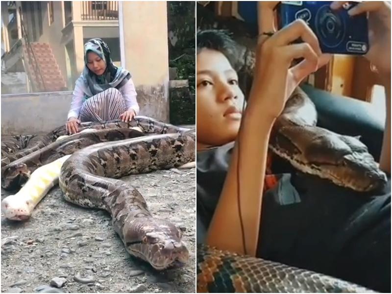 Menina de 14 anos tem seis cobras pítons gigantes como animais de estimação