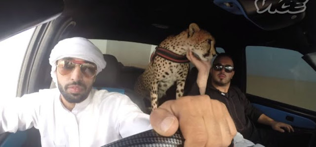 Rich Arabs have lions and cheetahs as pet