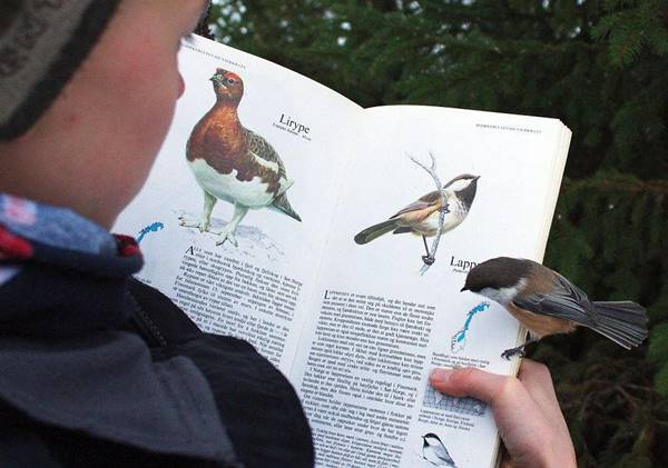 A boy who eagerly looks at picture book of birds. The same bird land on his hand which he is watching in his book.