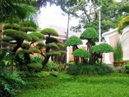 jasa buat taman rumah cantik