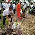 Bright PLN Batam Tanam 200 Pohon Tabebuya di Sekitar PLTGU Tanjung Uncang