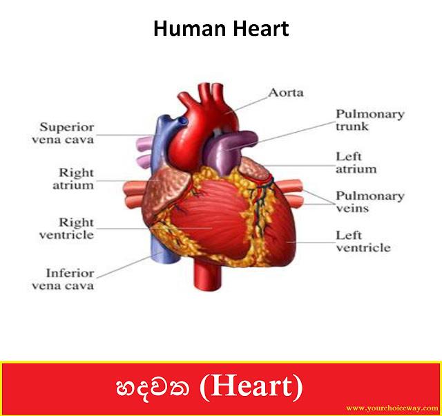 හදවත (Heart) - Your Choice Way