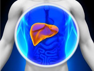 imagen Cuidar el hígado es beneficioso para su salud