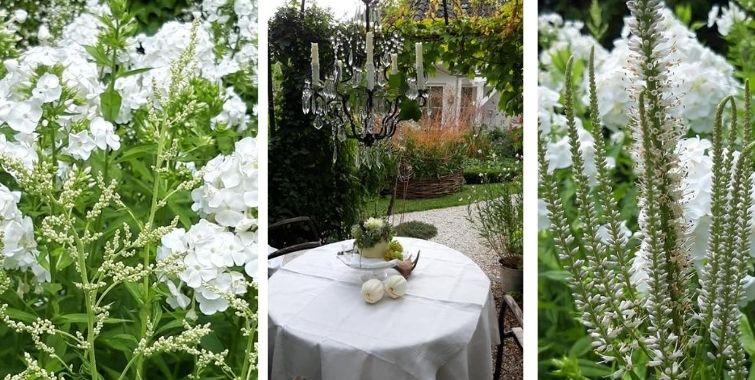 Pflanzen für den weißen Garten
