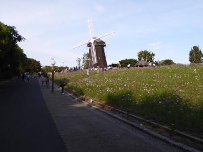 花博記念公園鶴見緑地のコスモス 風車の丘