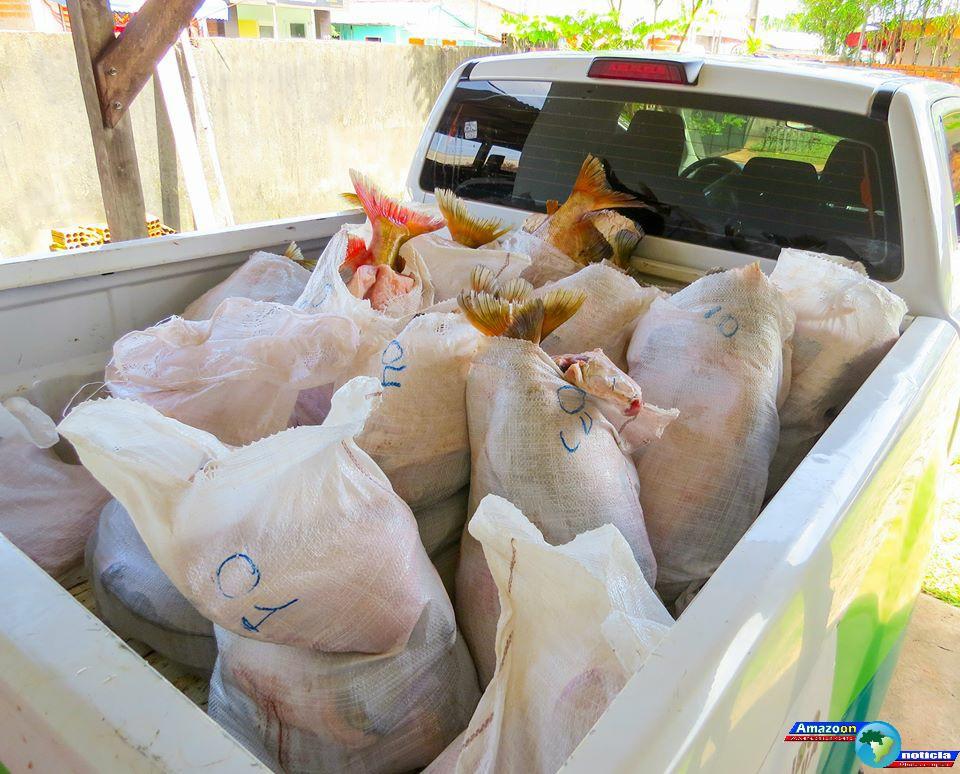 Mais de 400 quilos de peixes protegidos pelo defeso são apreendidos em Juruti