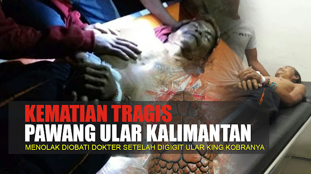 Kematian Tragis Kematian Pawang Ular Kalimantan Setelah Dipatuk King Kobra yang Dimainkannya...