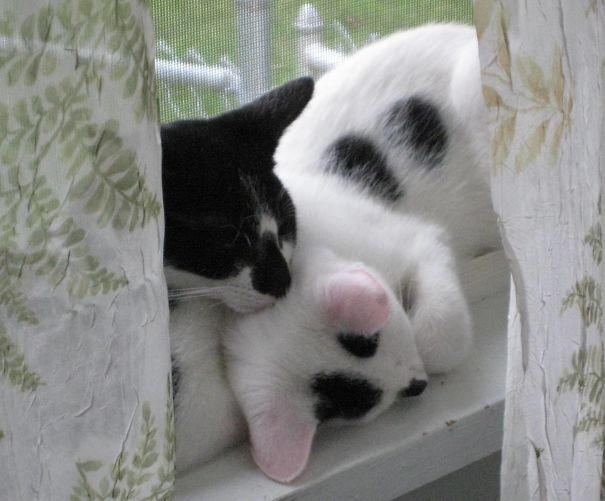 #2 Black & White
