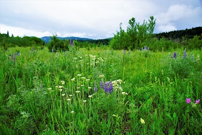 Wildflowers at Beauvais Lake Provincial Park