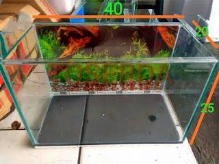 aquarium-kaca-kura-kura.jpg