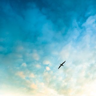 Tak Ada Burung Gagak || Puisi 2020