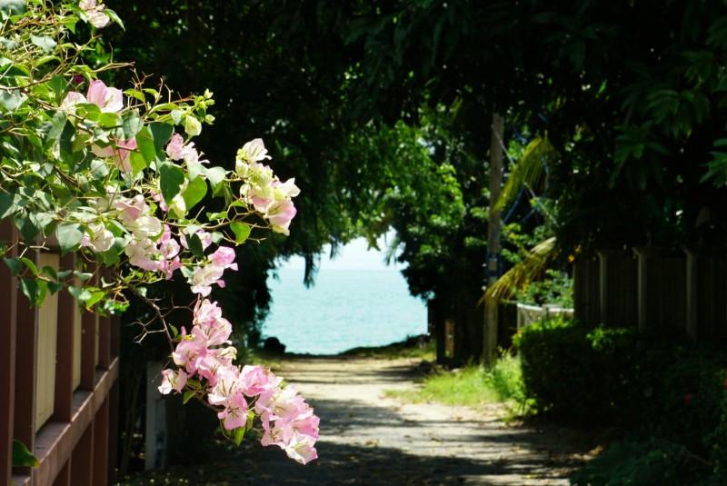 Thaimaa, ko_samui, tropiiķki