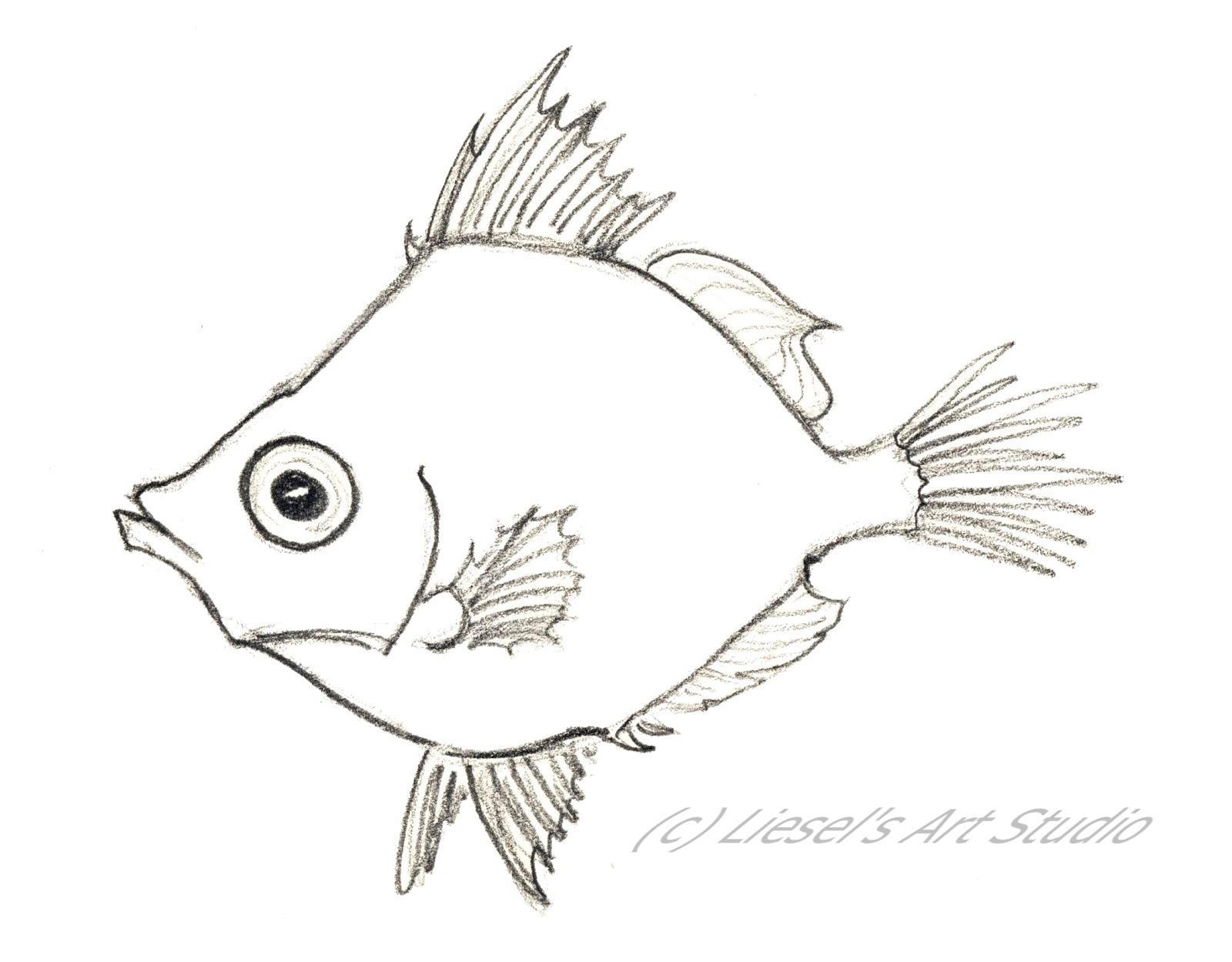Drawings Of Fish