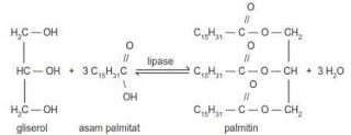 gugus reaksi gliserol, asam palmitat, palmitin