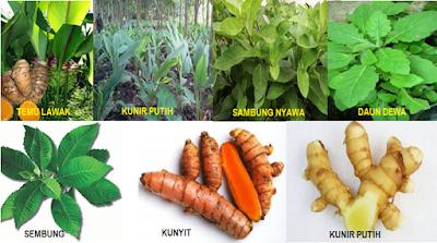 Herbal magafit - www.infojagakesehatan.blogspot.com - isman
