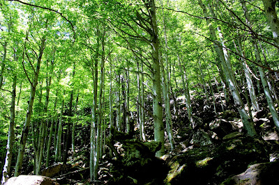 Bosques de hayas en el valle de Ordesa