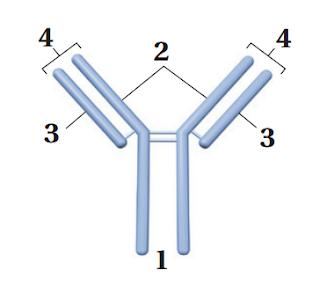 اختبار مقنن 9 – جهاز المناعة.