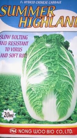crop keras,tahan simpan,tahan pecah, tahan busuk hitam, cepat panen,summer highland,Sawi Putih