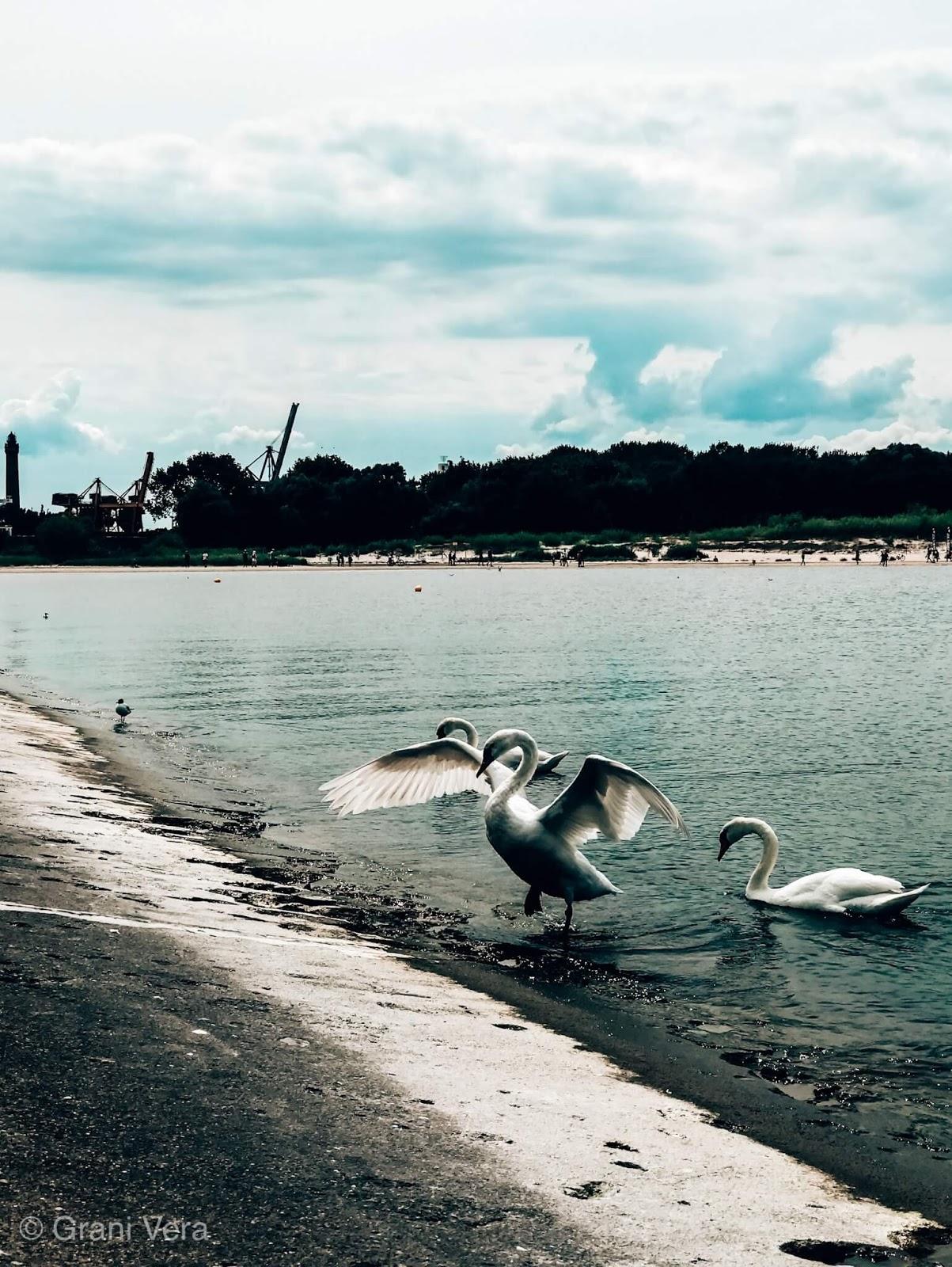 ptaki na plaży obok latarni stawy