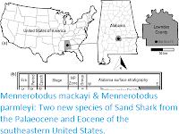 https://sciencythoughts.blogspot.com/2020/07/mennerotodus-mackayi-mennerotodus.html