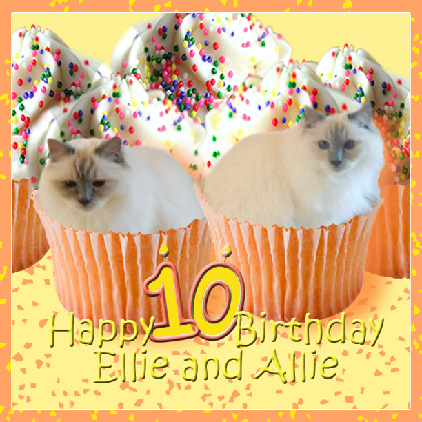 Friends FurEver: Happy 10th Birthday Ellie And Allie