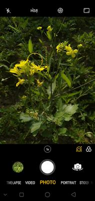 good quality smartphone photos