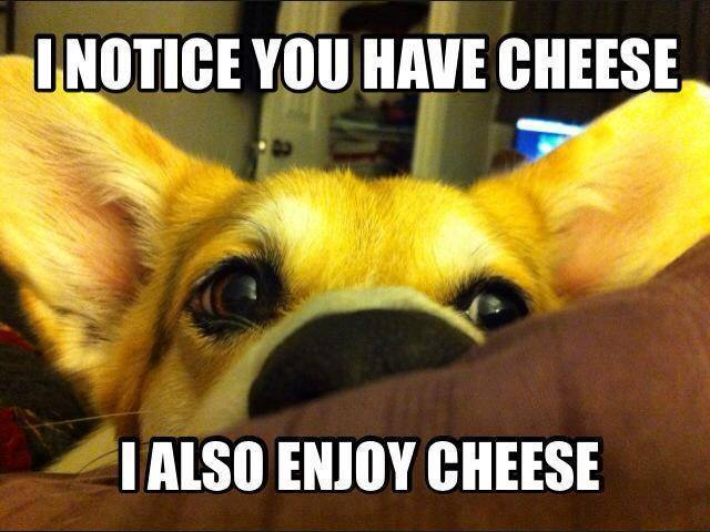 30 Funny animal captions - part 57, funny animal caption images