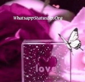100-amazing-love-whatsapp-profile-pics