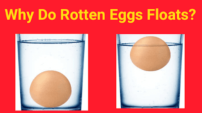 why do rotten eggs float?