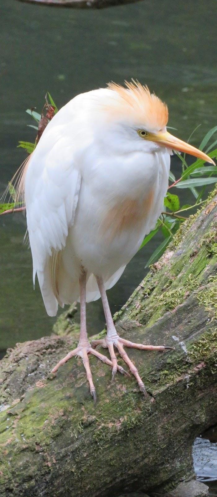 Beautiful egret.