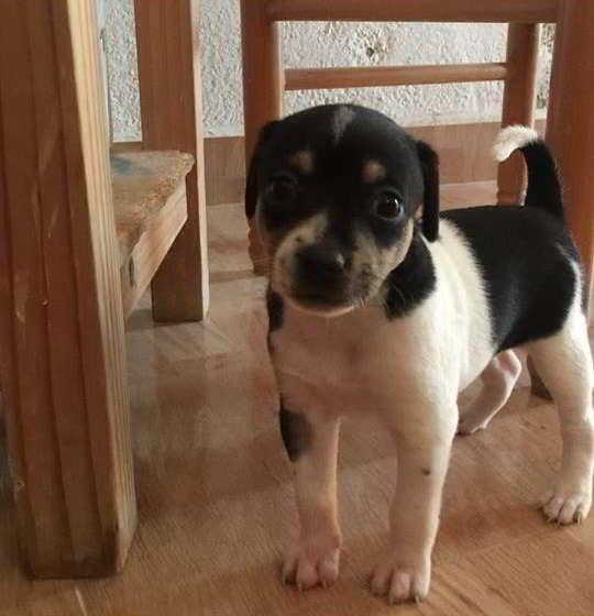 cachorras de talla pequeña 1