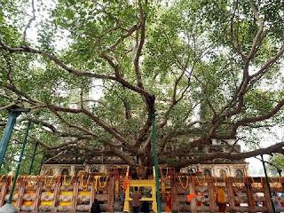 Bodhi Tree Buddhist tourism