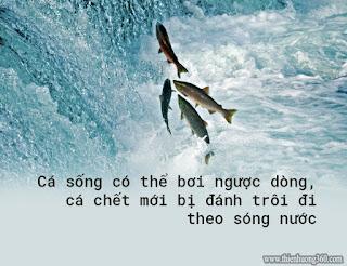 Không nhận cá