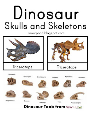FREE 3-Part Card for Safari Ltd Dinosaur Skulls from In Our Pond