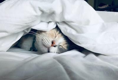 مصطلحات الفعل Sleep في اللغة الإنجليزية