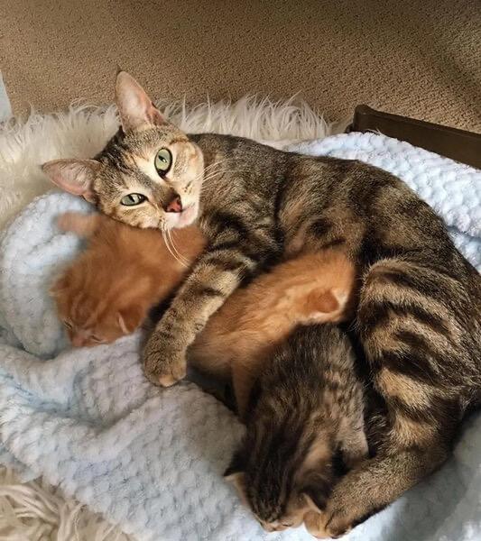 Счастливое воссоединение. Бродячая кошка нашла своих четверых котят, которые все это время ждали её