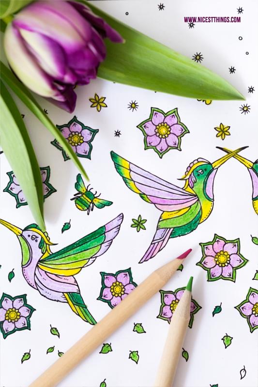 Zeichnung Kolibris mit Buntstiften ausgemalt Johanna Basford