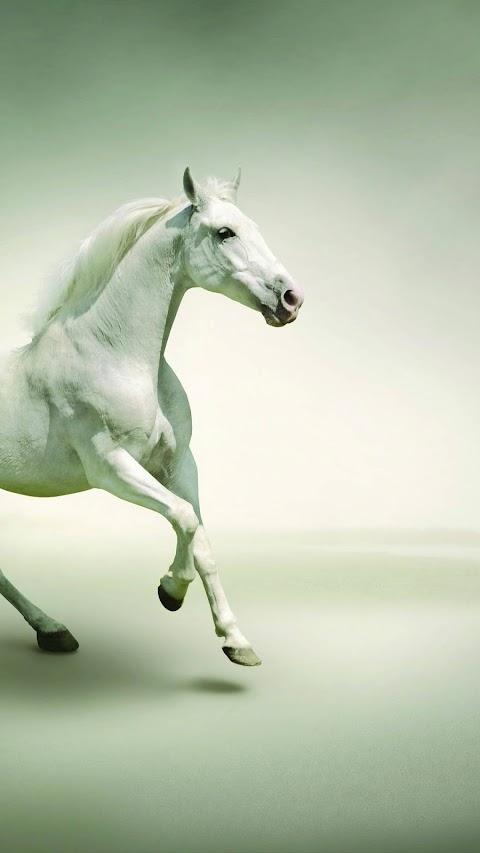 Ngựa Trắng Tung Nước Đại