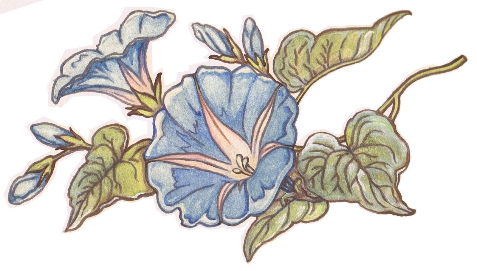 Morning Glory Vine Stencils : Lilac lavender morning glory clip art printable