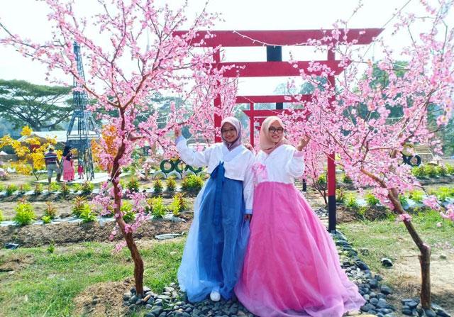 taman bunga sakura di kota metro lampung