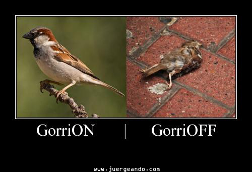 GorriON - GorriOFF