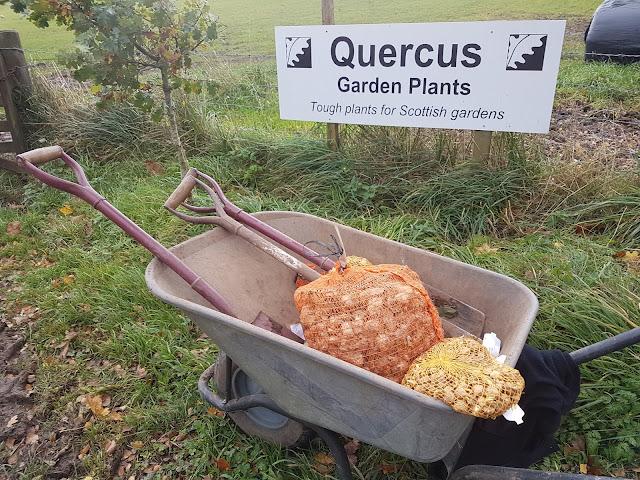 Bulb planting season!