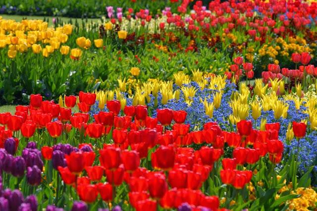 Imagenes De Jardines Con Flores: JARDIN CON FLORES COLORIDAS
