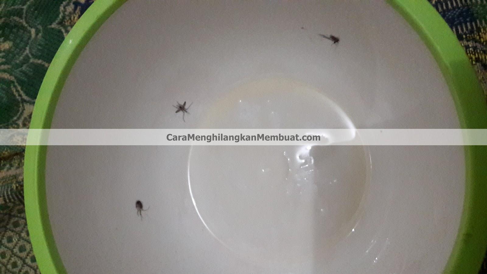 Cara Membuat Alat Penangkap Nyamuk dengan Mangkok Plastik