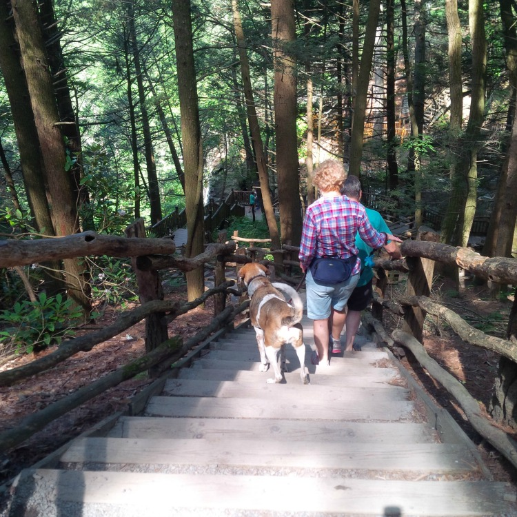 Bushkill Falls Is Pet Friendly So You Can Bring Your Dog Okay Now Normally I Am All About Bringing My Places And Know Both Baylee Belle Would