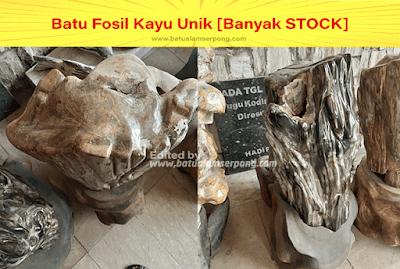batu kayu fosil