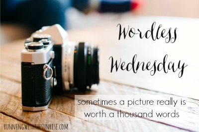 Wordless Wednesday # 630...Wordless Wenesday
